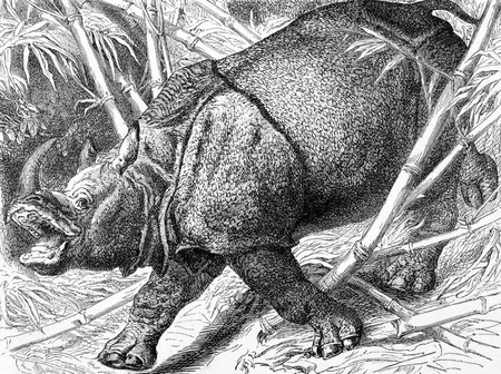 Indian Rhinoceros on engraving from 1890. Engraved by unknown artist and published in Meyers Konversations-Lexikon, Germany,1890. photo