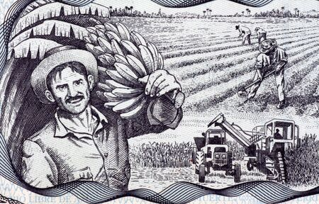 banknote uncirculated: Agricultural Scene on 20 Pesos 2006 Banknote from Cuba