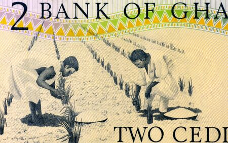 unc: Workers Tending Plants on 2 Cedis 1979 Banknote from Ghana  Stock Photo