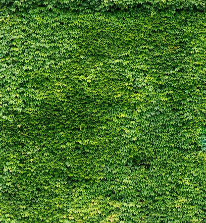 green wall: Green Wall