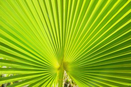 Palm leaf, macro