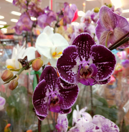 Orchids for sale in the market