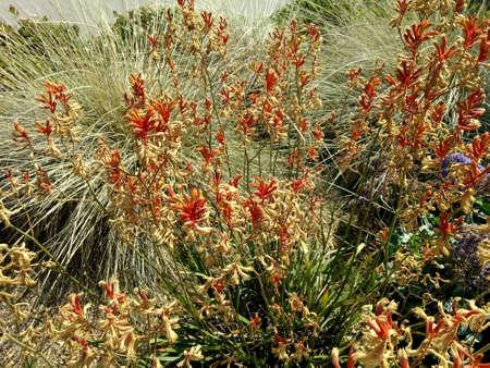 California Flowering Brush