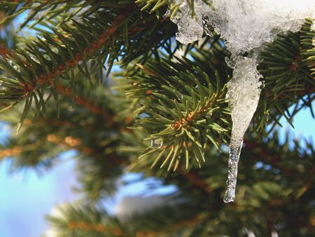 Spruce Tree Tak met Opknoping Ice Stockfoto