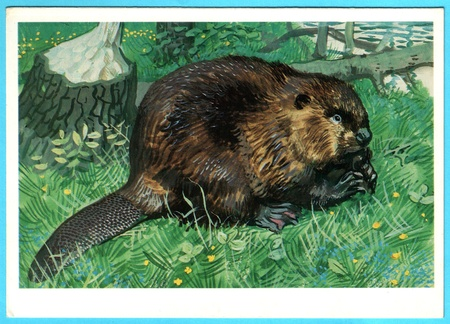 USSR - CIRCA 1990: Postcard shows draw by Artist  Gorbatov - animals of the red book - castar fiber pohlei, circa 1990