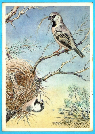 USSR - CIRCA 1989: Postcard shows draw by Artist  Gorbatov - animals of the red book - desert sparrow (Passer simplex), circa 1989