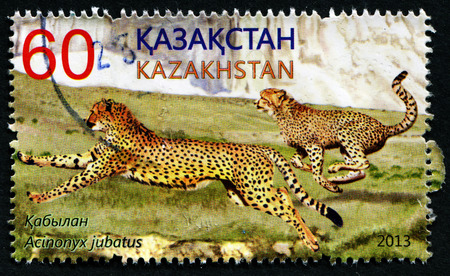 KAZAKHSTAN - CIRCA 2013: A post stamp printed in Kazakhstan shows acinonyx jubatus, circa 2013
