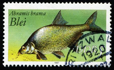 abramis: GDR - CIRCA 1987: a stamp printed in GDR shows bream, abramis brama, circa 1987 Editorial