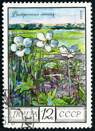 russia steppe: RUSSIA - CIRCA 1975: post stamp printed in USSR (CCCP, soviet union) shows image of wood anemones, steppe from regional flowers series, Scott catalog 4397 A2090 12k black multicolor, circa 1975