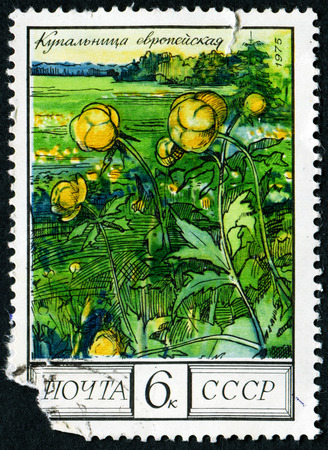 stempel: USSR - CIRCA 1975: A stamp printed in USSR from the Flowers (1st series)  issue shows Globe flower, circa 1975.