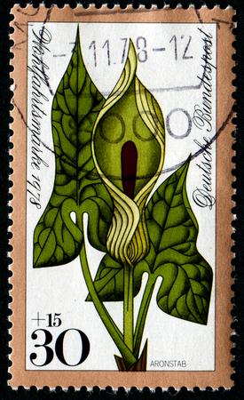 FEDERAL REPUBLIC OF GERMANY - CIRCA 1978: A stamp printed in the Federal Republic of Germany shows Aronstab, Wohlfahrtsmarke 1978, circa 1978
