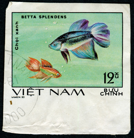 aquarian: VIETNAM - CIRCA 1980: A stamp printed by Vietnam shows fish Betta splendens, stamp is from the series, circa 1980