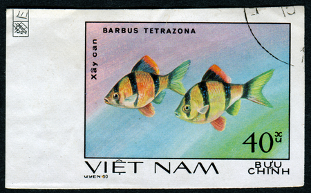 tetrazona: VIETNAM - CIRCA 1980: A stamp printed by Vietnam shows fish Barbus Tetrazona, stamp is from the series, circa 1980