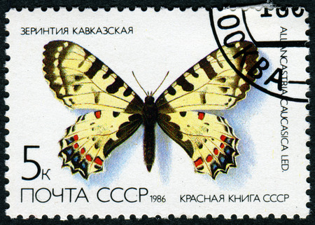 red book: USSR - CIRCA 1986: A stamp printed in the USSR (Russia) shows a Butterfly with the inscription Allancastria Caucasica, from the series Red Book USSR, circa 1986 Editorial