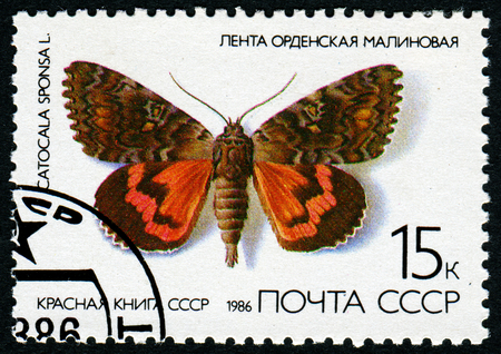 catocala: USSR - CIRCA 1986: A stamp printed in the USSR - a Butterfly with the inscription Catocala sponsa, from the series Red Book USSR, circa 1986 Editorial