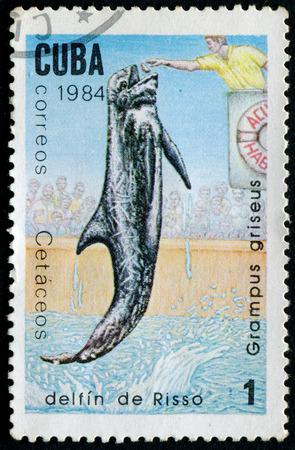 grampus: CUBA - CIRCA 1984:A Postage Stamp Shows Grampus Griseus, circa 1984