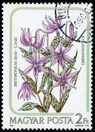 canis: HUNGARY - CIRCA 1985: A stamp printed in Hungary, shows erythronium dens - canis, circa 1985. Editorial