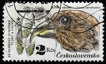 czechoslovakia: CZECHOSLOVAKIA - CIRCA 1983: stamp printed by Czechoslovakia, shows Pine cones, crossbill, circa 1983