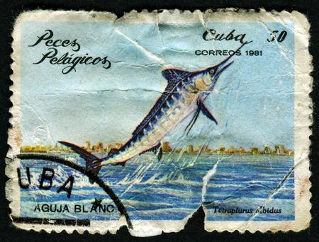 CUBA - CIRCA 1981: A Stamp printed in Cuba shows a white marlin with the inscription Tetrapturus albidus from the series Pelagic Fish, circa 1981