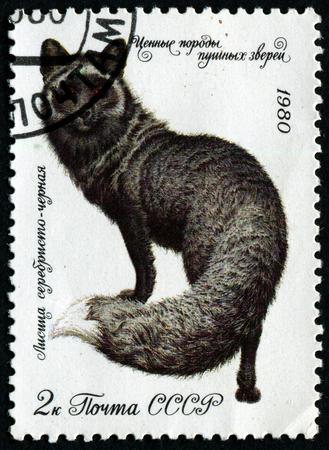 silver fox: URSS - CIRCA 1980: Un sello impreso en la URSS muestra de plata de piel de zorro negro, alrededor de 1980