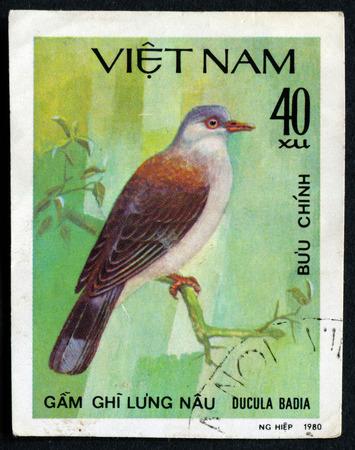 feathering: VIETNAM - CIRCA 1980: A stamp printed in the Vietnam, shows a rare bird, circa 1980 Editorial