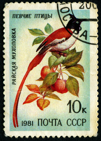 ave del paraiso: URSS - CIRCA 1981: un sello impreso en la URSS, muestra el ave del para�so papamoscas, p�jaros cantores, alrededor de 1981 Editorial