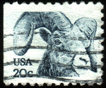 ovis: UNITED STATES - CIRCA 1982: A stamp printed in the United States, shows bighorn sheep (Ovis canadensis), circa 1982 Editorial