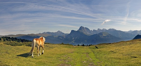 lonely horse on italian alps