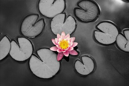 nenuphar: a particular view of a waterlily Stock Photo