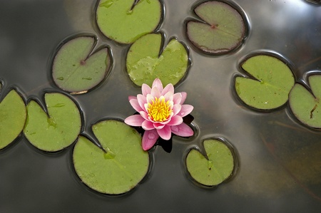 a particular view of a waterlily Stock Photo