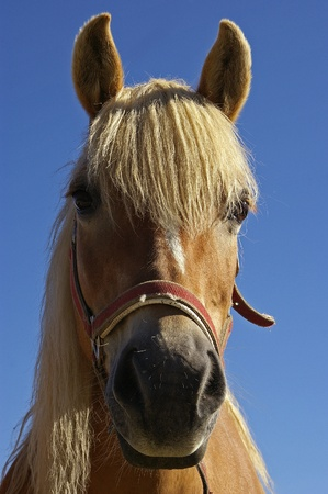A NICE VIEW OF A BEAUTIFUL HORSE Stock Photo - 10475947