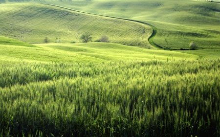 a nice view of tuscany landscape