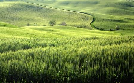 tuscany landscape: a nice view of tuscany landscape