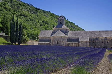 abbaye: abbey of Senanque,Provence,France