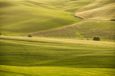 green field of tuscan landscape,Tuscany,Italy photo