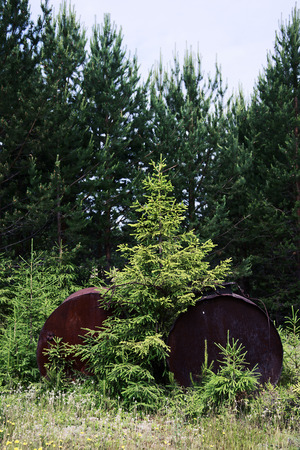 Spruce between abandoned barrels 写真素材 - 108006599