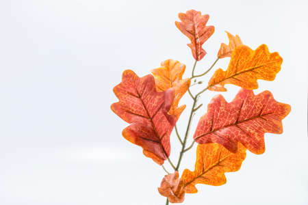 White oak leaf. Factory made. Not real. White Background