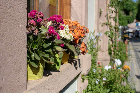 Colorful flowers in pot on windowsill. Some of the flowers are dried out. Stok Fotoğraf
