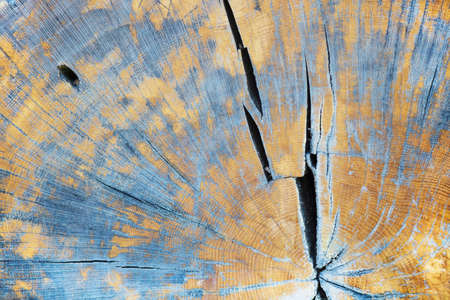 Close-up of cross-section of tree. The trees are seen.
