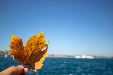 View of yellowed sycamore leaf and sea and steamer in background.