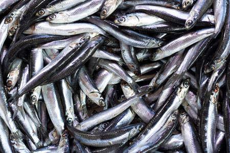 Image de tas d'anchois chassés sur banc. Prise sur le comptoir. Banque d'images