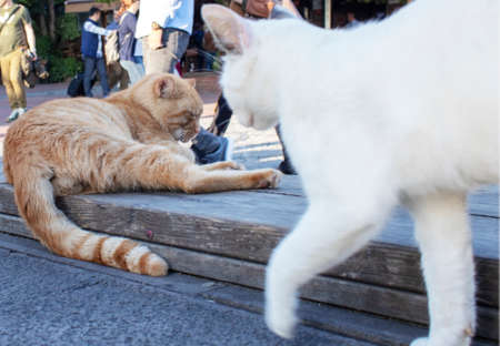 Yellow and white cats are playing. People sitting in the background blurring. Photo Ortakoy was photographed in Turkey.