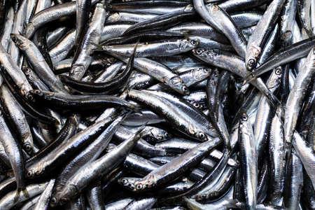 Heap of small Mediterranean anchovy fish at market.