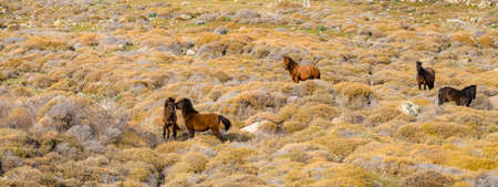 On the hill, stray horses graze in the grass on the land. The colors are brown.
