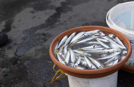 Fish in a brown box with water on the fishing line. A few of them are alive. Stock Photo