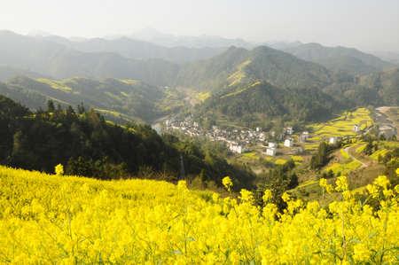 pastoral scenery: Rape and rural pastoral scenery Stock Photo