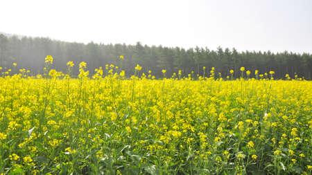 Bashang grasslands and mulan paddock scenery