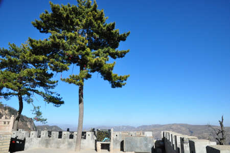 Trees in an ancient chinese compound