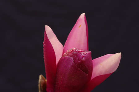 Close up on blooming flower