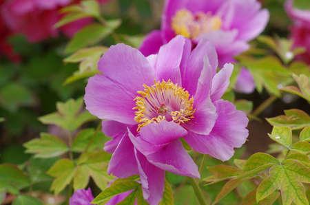 Close up on beautiful flower
